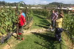 Tuscan Countryside VIP Private Tour (12hrs), Wine Tasting & Lunch inclu