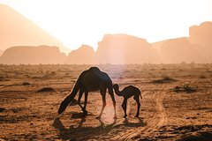 Full day tour. from Amman, Petra and Wadi Rum