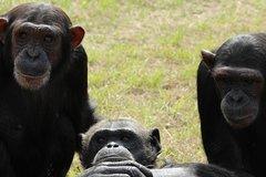 Chimp Eden and Botanical Garden Full Day Tour