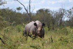6 Days Samburu Olpejeta Nakuru and Naivasha Safari