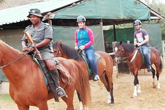 Addo Elephant Safari and Horseback Riding in Addo Combo -