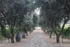 Wine - Oil tasting & light lunch from Rome - Private Tour