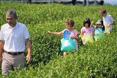 Family picnic in a Tea Field