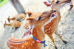 Taiwan Paradise of Deer Admission Ticket