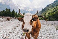 Hiking tour of Komani Lake and Valbona Valley in three days