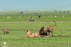 6 Days  5 Nights Safari to Tarangire  Ngorongoro  Serengeti