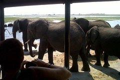 2 Days 2 Nights Camping Safari in Chobe National Park