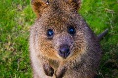 Sydney Day Tour : Blue Mountains & Australian Wildlife Explorer