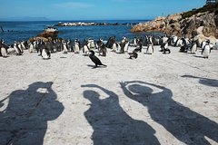 Cape of Good Hope and Penguins Small Group Sightseeing Tour from Cape Town