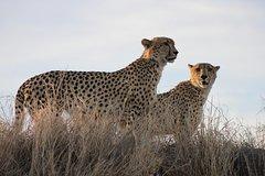 3 Day budget Kruger National Park tour