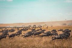 6-days Safari in Northern Tanzania