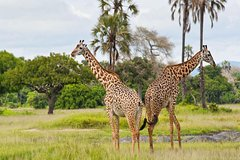 2-Day Private Safari to Ruaha National Park