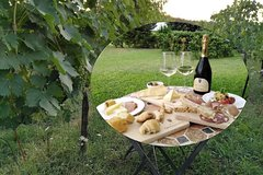 Pic Nic in the vineyard of PODERE CASANOVA