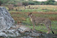 6 Days/ 5 Nights Etosha and Sossusvlei Experience - Self-drive