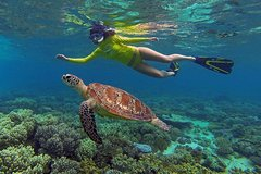 3 Day Cape Tribulation and Great Barrier Reef Package