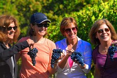 Tenuta Torciano Wine Tour in Tuscany - visit two wineries and San Gimignano