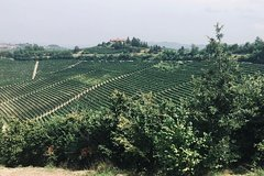 Private Barolo Wine Tour with Winemaker from Milan