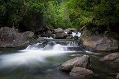 Waterfall and Wallabies Sighting Tour