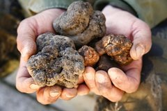 Truffle Hunt & Wine Tasting - Private Tour