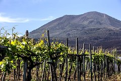 Mount Vesuvius & Wine Tasting with Lunch Private Tour from Naples