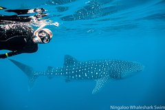 Whaleshark and Wonder Tour (to 1st July)