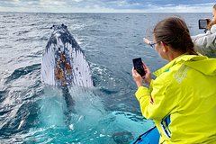 Small Boat Whale Watching Tour with Sea the Gold Coast