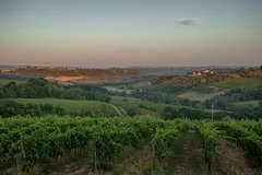 Country picnic in the heart of Chianti