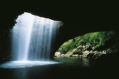Natural Bridge, Springbrook & Gold Coast Tour