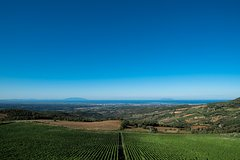 Bolgheri Wine Tour: spectacular tasting among the coastal hills of Tuscany