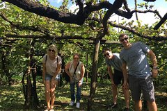 Wine experience and cooking class in Amalfi Coast