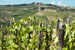 Chianti private tour: food and wine eperience