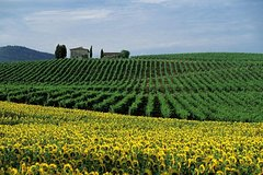 Savour Exquisite Wines In Chanti and Visit Siena & San Gimignano + Lunc