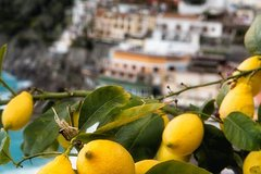 Local product and food tour in Sorrento