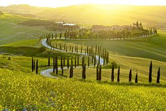 Savour Exquisite Wines, Brunello of Montalcino & Nobile Wine Tour (3 Wi