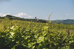 Langhe and Barolo Wine Tour from Turin