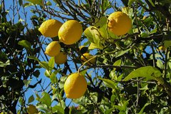 Amalfi Lemon Experience - From Sorrento