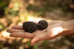 Truffle Picking Experience with 3 Course Lunch in Chianti hills