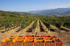 3 days of Wine Camp in Organic Estate in Chianti hills