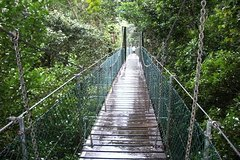 O'Reillys Tree Top Walk from Brisbane
