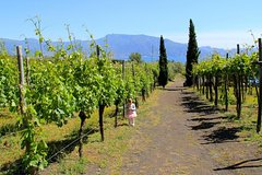 Wine Tasting and Lunch on the Vesuvius during Amalfi Coast to Rome Transfer