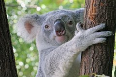 Virtual Interactive Australian Wildlife Tour With Private Guide-Wildlife Habitat