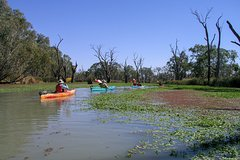 Kayak, Wine & Dine in the Barossa Region