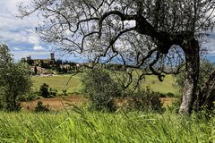 Chianti Classico E-bike Tour (half day)