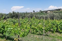 Castelli Romani wine Tour