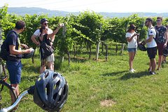 Valpolicella Bike Tour from Verona