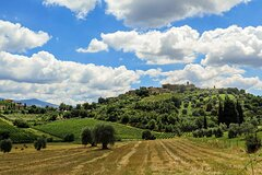 Wine tasting experience in Tuscany: half day minivan tour from Florence