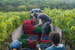 Private Half-Day Tour of Chianti Classico Wine Region