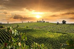 Wine Cheese and EVO Oil Tastings Southern Tuscany Fullday from Rome