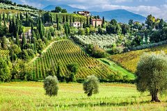 Truffle and Brunello Sommelier Vip Experience in Tuscany Lands from Florenc