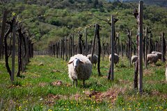 Italian Cooking Class in Abruzzo from Rome with Wine Tasting